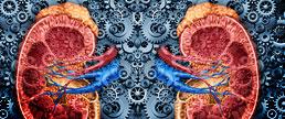 O tratamento com IECA ou BRA deve ser interrompido com a piora da função renal?