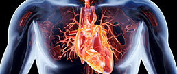 Adesão às estatinas e a mortalidade em coronarianos