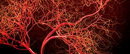 Influência da redução do LDL-C em diabéticos submetidos à revascularização coronária